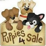 puppies4sale